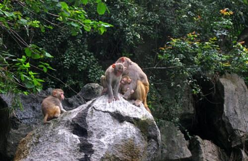 Monkeys in Halong Bay